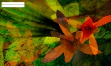 花卉背景创意设计图图片