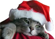 圣诞凯蒂猫 Christmas Kitty图片