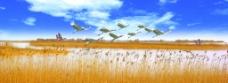 湿地风光图片