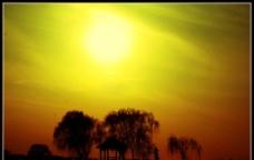 斜阳树影图片