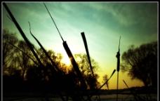 芦苇剪影图片