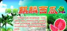 海南 麒麟西瓜图片