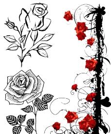 玫瑰花圖片