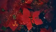 红花丛图片