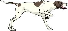 常见动物0623