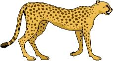 常见动物0635