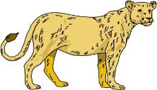 常见动物0639