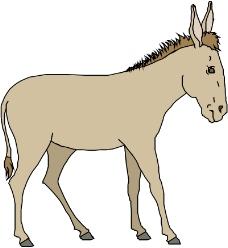 常见动物0649