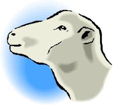 常见动物0292