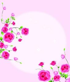 玫瑰花的约定图片