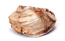 贝壳化石 海底化石 科普化石 地质化石 鱼类 昆虫图片