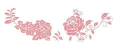 牡丹花圖片
