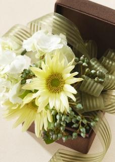 鲜花 花朵 菊花