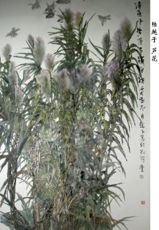 陆越子_芦花图片