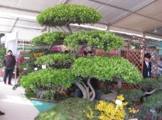 绿色造型树
