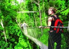 丛林吊桥图片