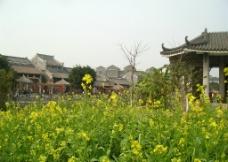 岭南建筑 传统建筑 油菜花图片