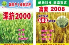 小麦宣传单海报图片