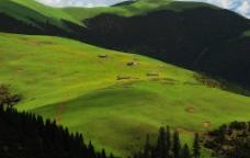 高原牧场图片