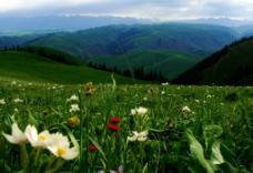 花满青山绿地图片
