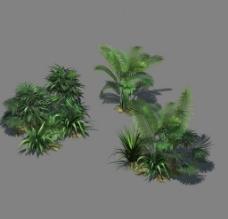 江南灌木图片