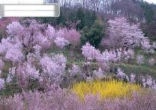 春暖花开 花朵 花瓣 花草 花卉