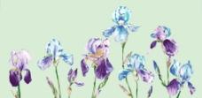 水彩兰花图片