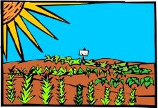 农业机械与庄稼0498