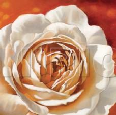 花卉油画112  50厘米 X 50厘米